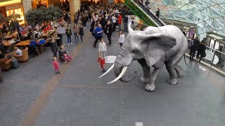 ELEPHANT IN A SHOPPING MALL
