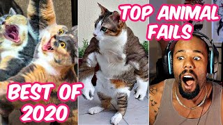 Best Of 2020 - Top Funny Pet Videos - TRY NOT TO LAUGH (Official Reaction)