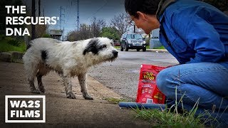 Fastest Rescue & Reunion of Lost Hungry Dog Ever Because of Microchip - Hope For Dogs