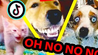 oh no oh no oh no no no TikTok meme with Pets Only | Compilation Part 5 | JLFA