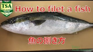 How to fillet a fish young yellowtail -Basic way of filleting in 3 pieces@Tokyo Sushi Academy