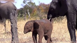 When A Baby Elephant Tragically Lost Its Trunk, Then Rescuers Feared About Whether It Can Survive