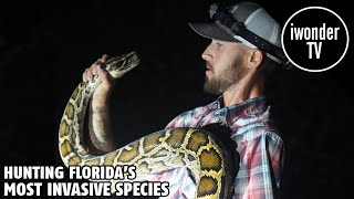 The Burmese Python Problem In The Florida Everglades And Iguana Problem In South Florida