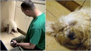 This Scared Little Dog Was An Hour From Being Put To Sleep  Then A Worker Came In To Calm Her