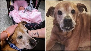 Wonderful Couple adopted senior dog from a shelter, the dog met his little sister happily then died