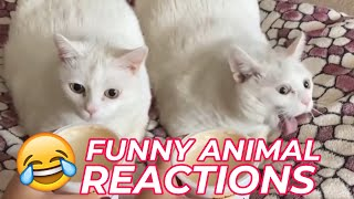 Funny animal reactions