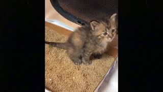 Best of Cute Baby Cats Compilation